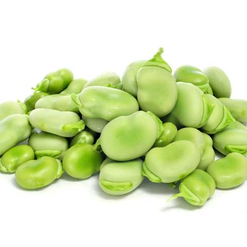 Broadbeans (fava beans), mature seeds, cooked, boiled, without salt